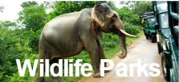 Wildlife Parks in Sri Lanka